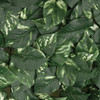 Close up of Artificial Pothos Leaves