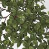 Close Up of Nematanthus Leaves