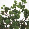 Close Up of UV Geranium Leaves with Burgundy Stem