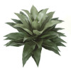 "A-130155 34"" H Large Outdoor Agave Plant"