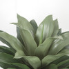 Close Up of Outdoor Agave
