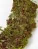 Artificial Moss Close Up