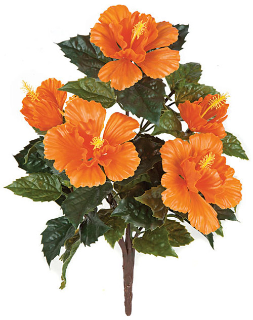 A-135510Outdoor Hibiscus Bush with Orange Flowers