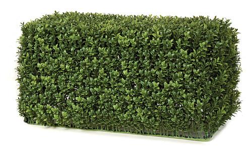 23 x 11 12 Inch Boxwood Hedge New Style Leaf Tutone Green