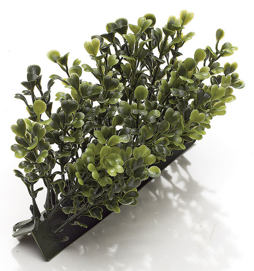 5 Inch Boxwood Edge 3 Inch Height