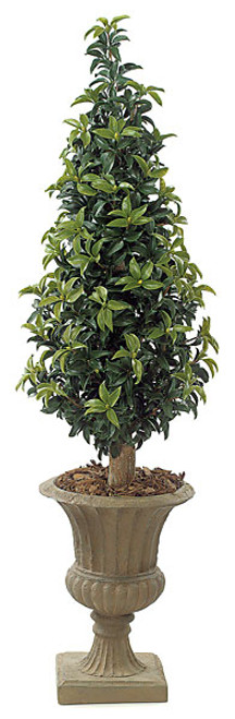 5 Foot Laurel Cone Topiary Natural Trunk
