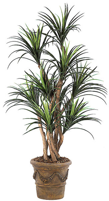 5 Foot Liriope Tree Natural Trunks 9 Heads 