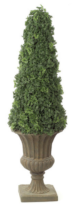 53 Inch Ming Aralia Cone Topiary Natural Trunk