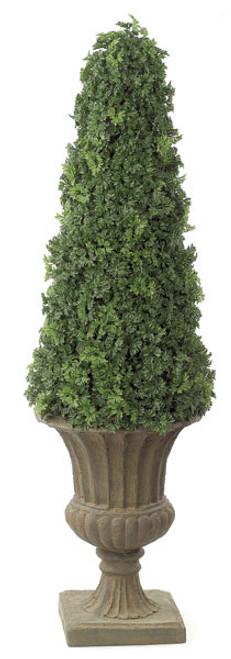 53 Inch Ming Aralia Cone Topiary
