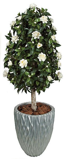4.5 Foot Gardenia Topiary