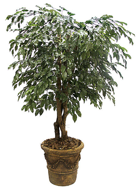 5 Foot Polyblend Ficus Tree
