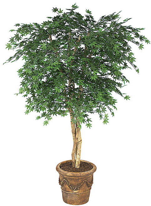 6 Foot Polyblend Japanese Maple Tree - Green or Rust