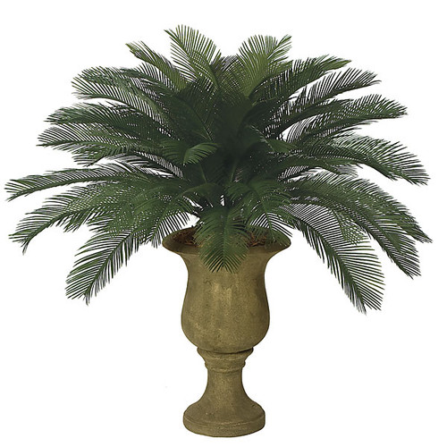 3 '  Cycas Palm Cluster 