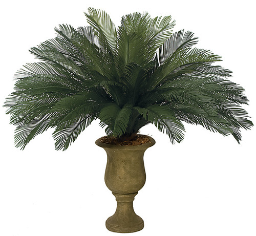 44 Inch Cycas Palm Cluster 36 Large Fronds