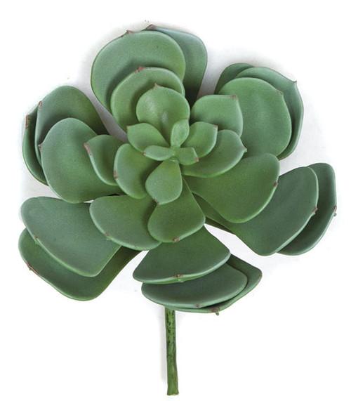 8 x 7 Inch Succulent - Green