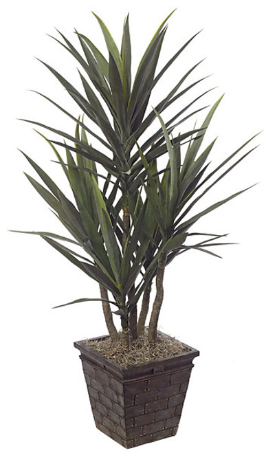 "50"" Yucca Plant in Weighted Base"