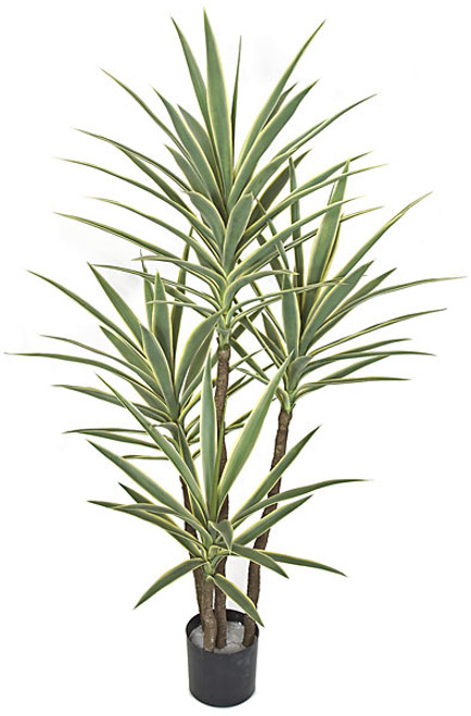 AUV-102100