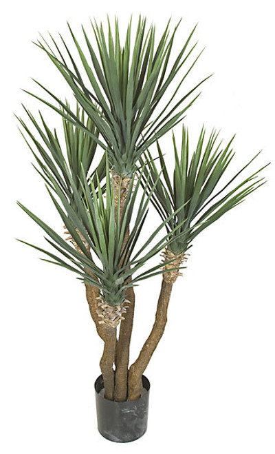 57 Inch UV Rated Yucca Rostrata Plant