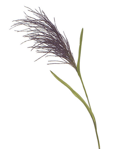 5 Foot Pampas Grass - Plum