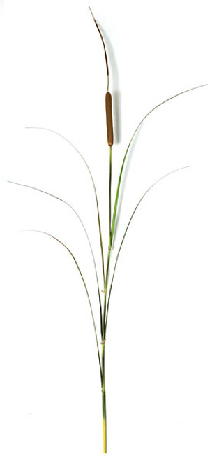60 Inch Cattail Spray with PVC Grass - Brown/Green