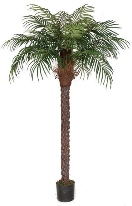 P-150570 8' Date Palm with 18 Fronds