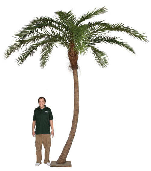 14 Foot Phoenix Palm Tree with Metal Plate