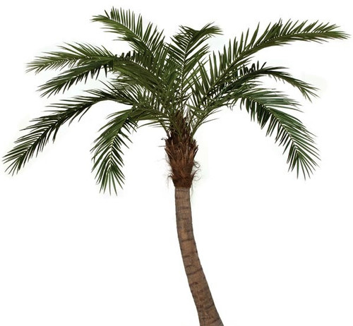 P-126500  9.5' Phoenix Palm Tree - Curved Trunk  with PIPE  No Base Plate