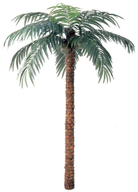 Coconut Palm Trees - 3 Sizes -  9 Feet Tall,  12 Feet Tall, and 15 Feet Tall