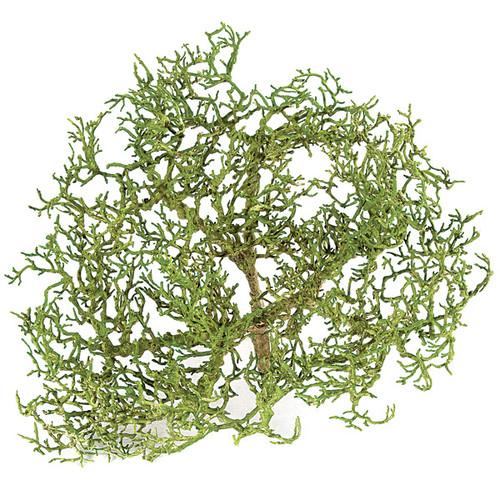 "13"" Tea Tree StumpGreen/Brown"