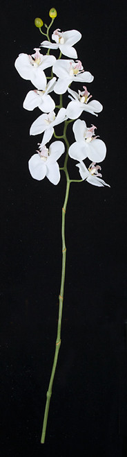 31 Inch Phalaenopsis Orchid Stem in White, Green, Purple, Beauty