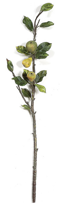 32 Inch Pear Branch (sold per piece)