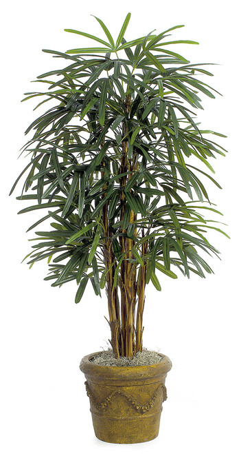 5' Lady Palm Tree