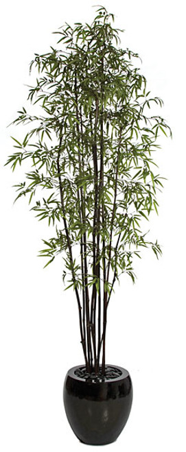 W-750009' Black Bamboo TreeDecorative Pot Sold Separately