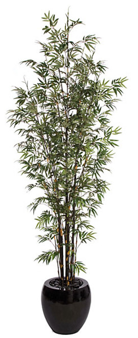 10 Foot Black Bamboo Palm Tree