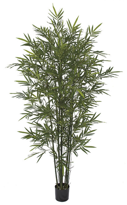 W-170075 7' Bamboo Palm with Green Canes