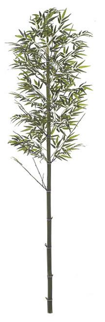 W-668099' Bamboo PalmNatural Cane