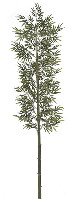 10' Bamboo PalmNatural Cane