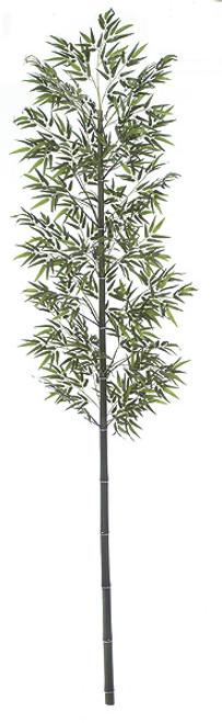 W-6681111' Bamboo PalmNatural Cane