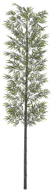 W-6681212' Bamboo PalmNatural Cane