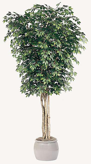 10' Ficus Tree - Regular or Fire RetardantDecorative Pot Sold Separately