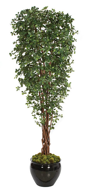 W-80070