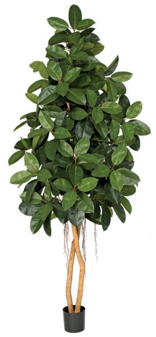 W-1401208' Rubber TreeNatural Wood Trunks