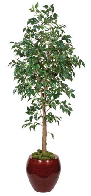 P-705926' Benjamina FicusDecorative Pot Sold Separately