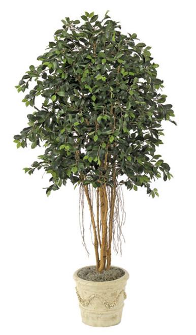 W-26106.5' Ficus TreeDecorative Pot Sold Separately