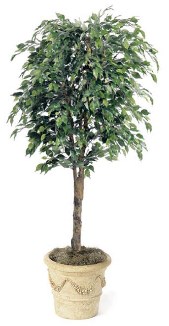 W-7646.5' Ficus TreeDecorative Pot Sold Separately