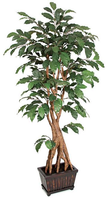 W-1112006' Coffee TreeRectangle Wood Pot Included