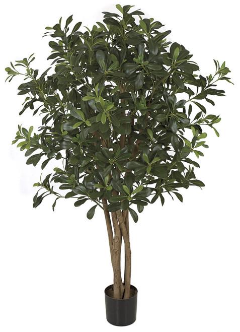 WR-160050 -Fire Retardant4' Pittosporum Tree