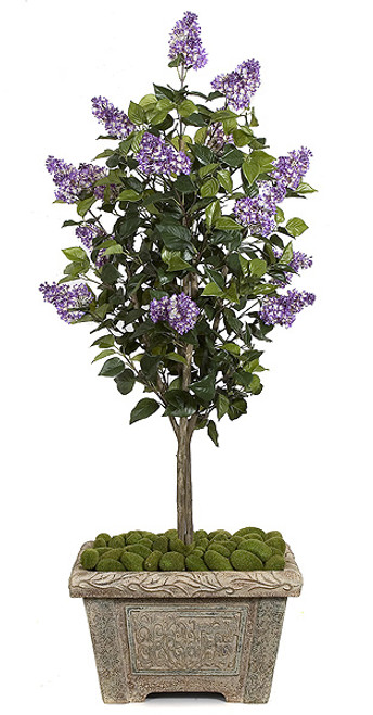 5 Foot Lilac Tree - Purple