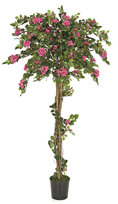6 Foot Beauty Pink Bougainvillea Topiary on Natural Wood Trunk