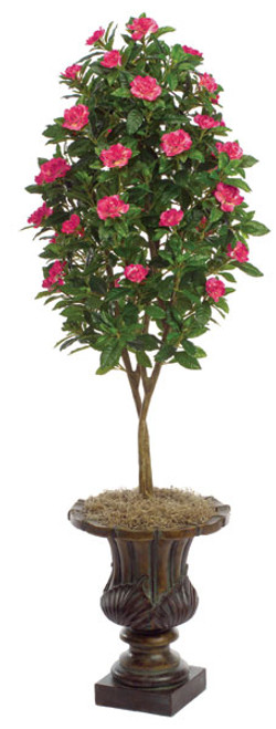 4.5 Foot Beauty Gardenia Topiary